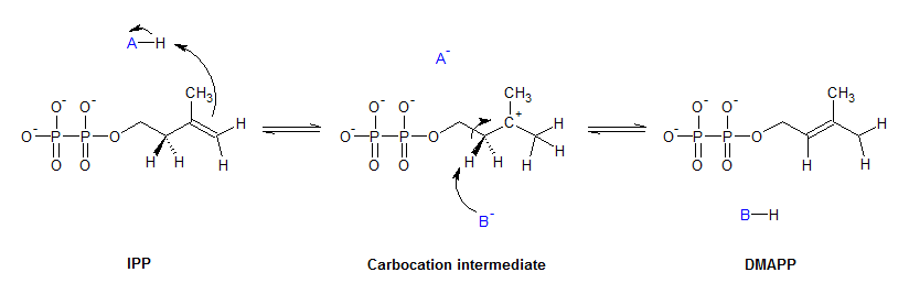 glycolysis is an example of what type of reaction