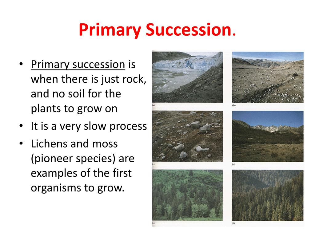 give an example of secondary succession
