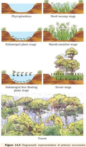 what is an example of ecological succession